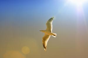 Kontakt Ostseeurlaub, Urlaubsresidenz, Ostseeküste Ferien